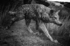 candice-wolf