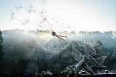 wire-fairy